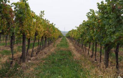 Les vins produits en biodynamie : principe et avantages